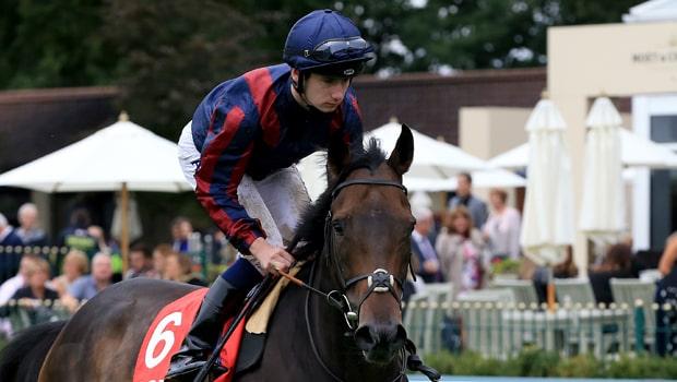 Cá cược đua ngựa: Đặt cược vào 13 đối thủ Tin Man tại Ascot