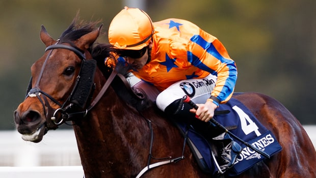 Cá cược đua ngựa tốt nhất tại Dafabet: Torcedor giải Melbourne