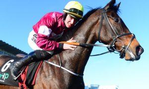 Tỷ lệ cược đua ngựa: Jack Kennedy sẵn sàng cho giải Champion Hurdle