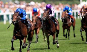 Giải đua ngựa Pinatubo gợi ý 2000 Guineas vòng đua