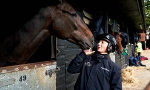Ngựa đua Frodon đặt mục tiêu vô địch giải Aintree
