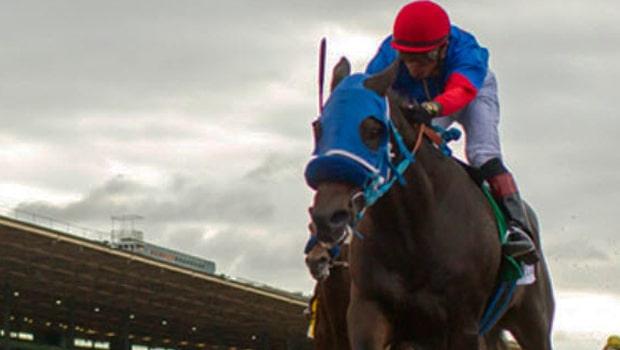 """Tin tức đua ngựa: Cái chết của ngựa đua """"Chú rể Mông cổ"""""""